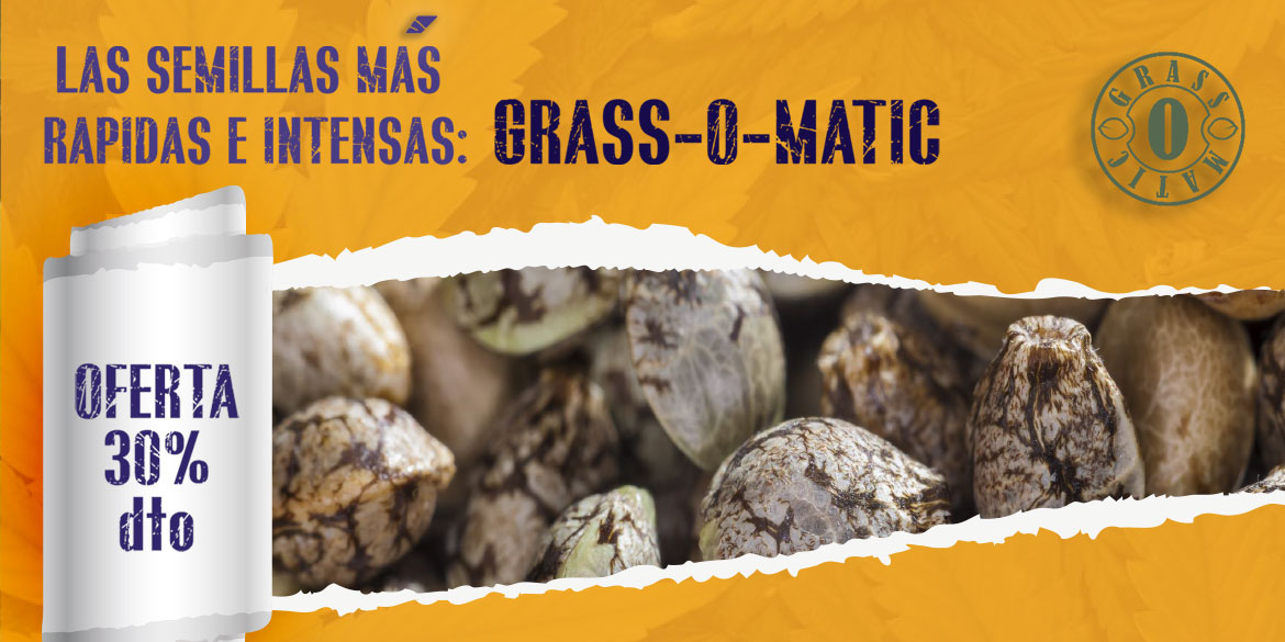 Grass-o-matic Seeds, las semillas de marihuana más intensas